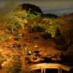 六義園の紅葉