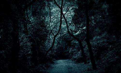 肝試しに使われそうな薄暗い森林の画像