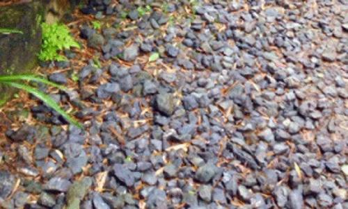 小石と葉っぱの画像